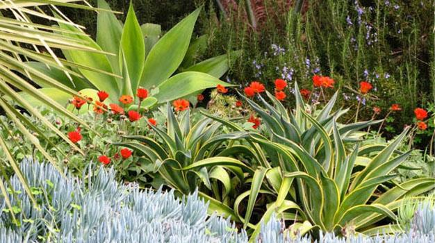 Water wise/drought resistant plants for Rustenburg | Rustenburg