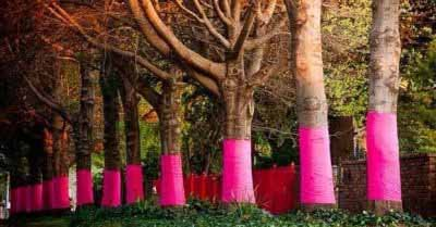 pink-trees-for-pauline400