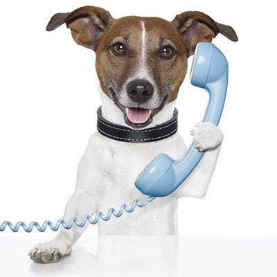 Doggie on phone400