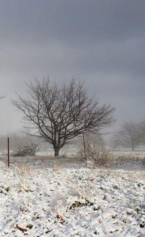 snow in SA 300