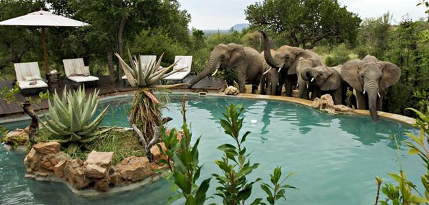 Madikwe swimming pool