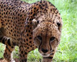 Johannesburg Zoo.