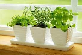 The Benefits of Creating an Indoor Herb Garden