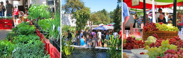 Stellenbosch | Food Market