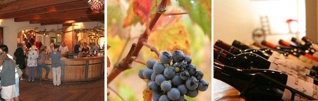 Stellenbosch | Wine Tasting