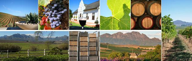 Stellenbosch | Wine Estates