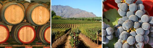 Stellenbosch | Wine Industry