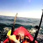 Shark tows Kayaker for two hours - see video.