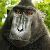 'Monkey selfie' sparks copyright row
