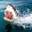 Shark kills man in Australia despite rescue attempt