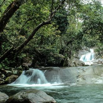 Woman survives 17 days in rainforest