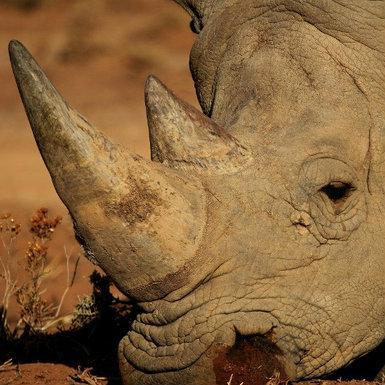 US charges SA duo over rhino hunts