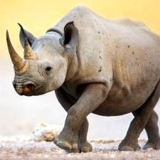 Two rhino poached in Etosha Park