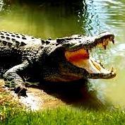 Crocodile kills golfer in Kruger National Park