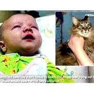 Cat saves baby in freezing Russia