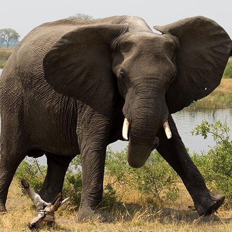 Watch: Elephant stabs live-streaming Greater Kruger safari vehicle