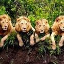 SA leads as safari destination