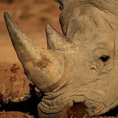 SA to host 2016 CITES talks