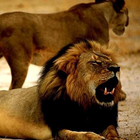 Men in court after US dentist kills Zimbabwe's Cecil the lion