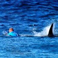 Shaken Fanning not giving up on surfing despite shark attack