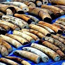 Ivory worth $4.4m seized in Vietnam