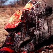 Hope not lost in rhino poaching fight, says Molewa
