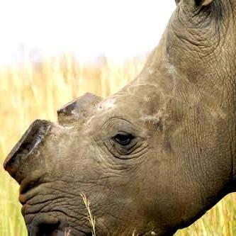 Stumping the poachers