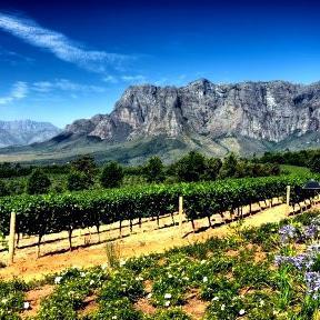 Stellenbosch – The kingdom of Cabernet
