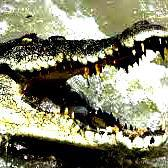 Man fights off crocs with spanners, spark plugs