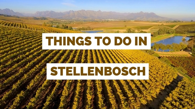 The Best Things To Do in Stellenbosch