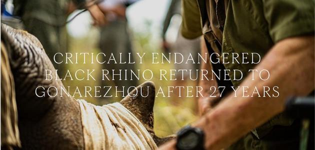 After 27 years, Endangered Black Rhino returns to Gonarezhou