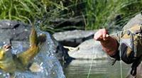 Fishing in the Vaal