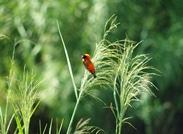 Parys Birds