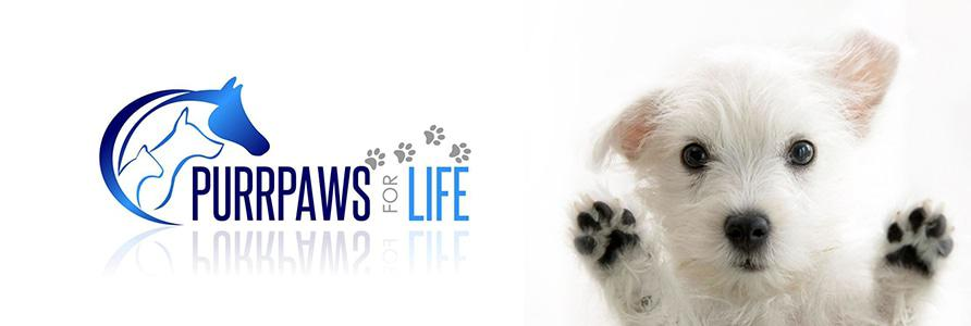 Vaal » Blog Archive » PurrPaws for Life