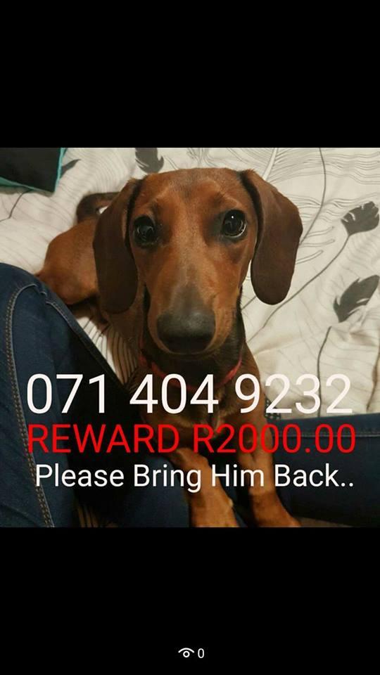 Missing Child Alert!