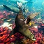 Take a virtual tour of South Africa's Marine Protected Areas