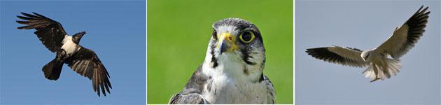 Birding Witbank
