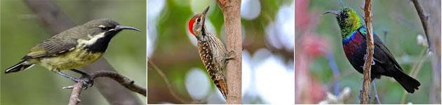 Witbank Birding