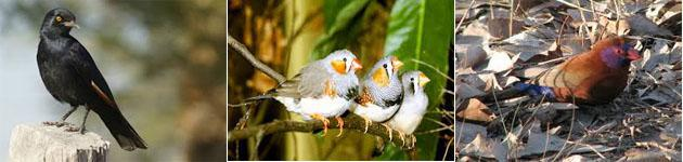 Witbank Birds