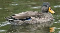 Worcester Birding